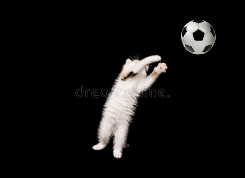 Download Fluffy goalkeeper stock photo. Image of jump, soccer - 19958938