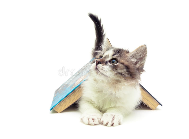 fluffy kitten lying under an open book isolated on white background stock images
