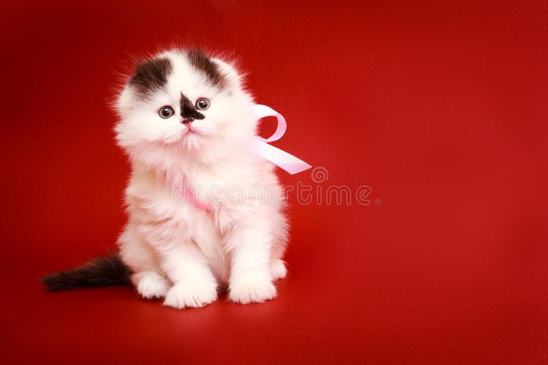 Fluffy kitten on a red background. Closeup portrait of a cat. The concept of pets and cats. Romantic kitten royalty free stock photos