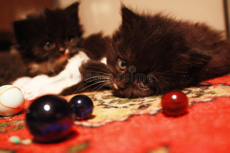 Fluffy kittens and glass balls. Little fluffy kittens are resting on the carpet. Nearby are beautiful glass marbles royalty free stock photo