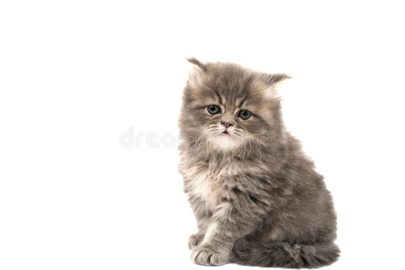 Fluffy kittens isolated. On white background stock photos