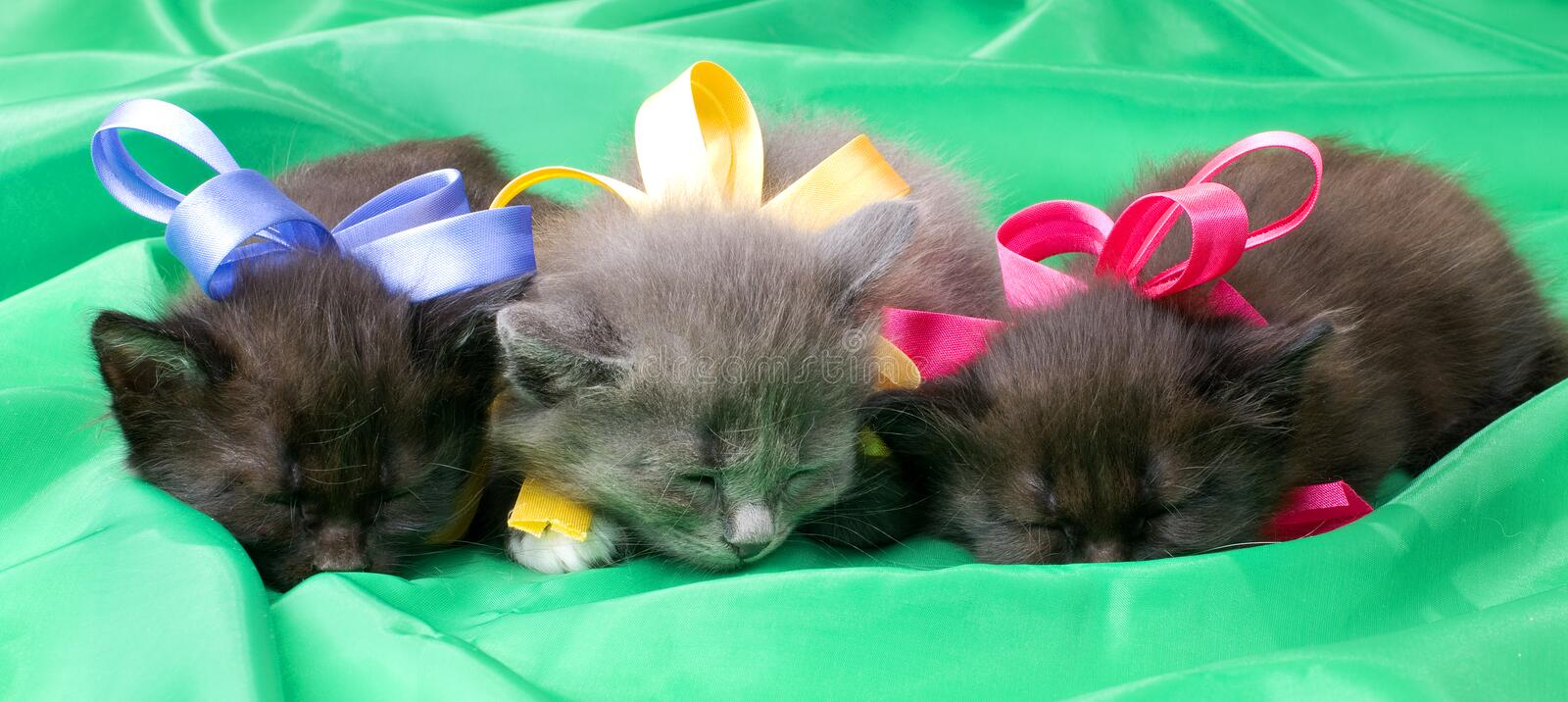 Fluffy little kittens. Two black and one gray beautiful fluffy little kittens, on green background cloth , sleep royalty free stock photos