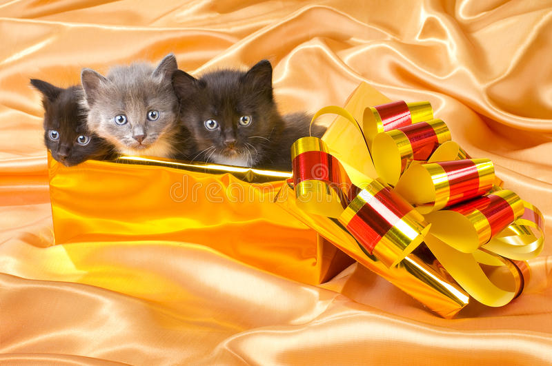 Fluffy little kittens. Three beautiful fluffy little kittens,in gold box-gift on gold background-cloth royalty free stock photos