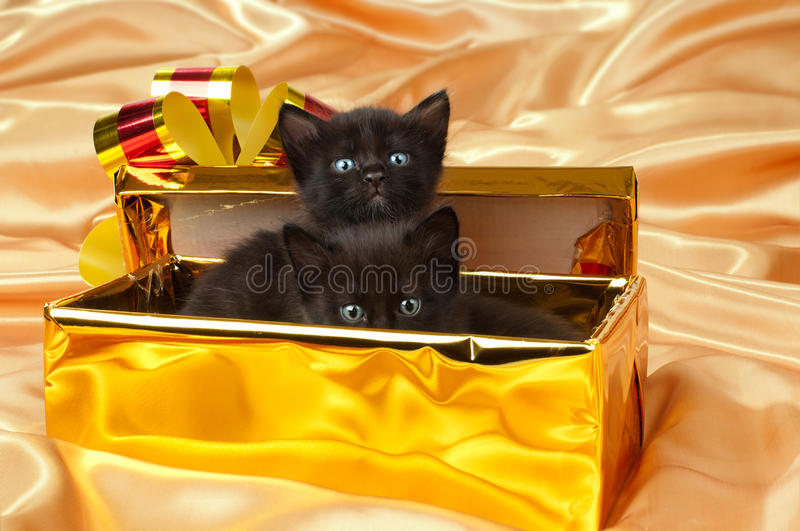 Fluffy little kittens. Two beautiful fluffy little kittens,in gold box-gift on gold background-cloth stock images