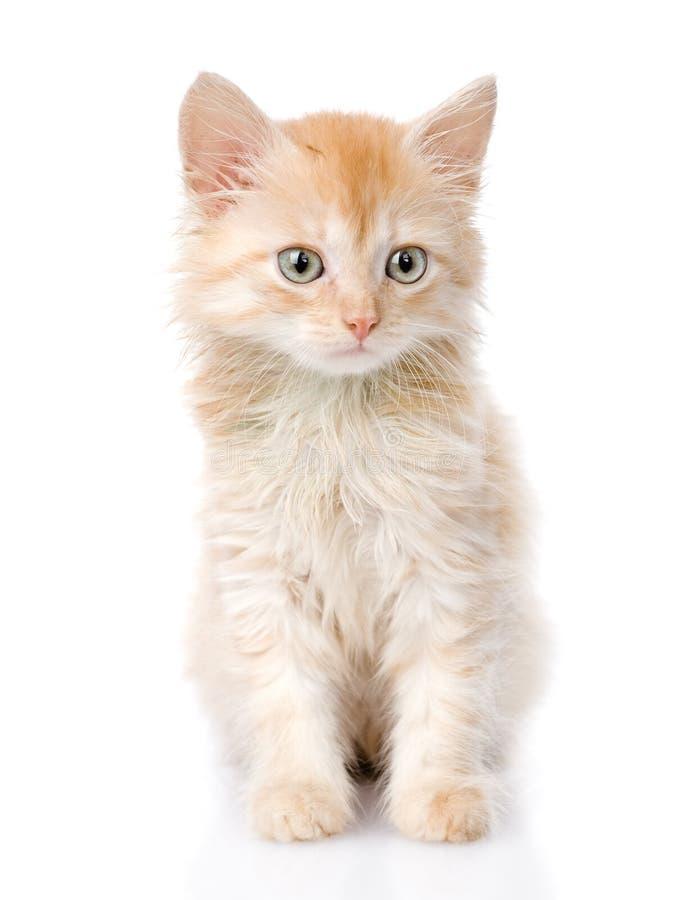 Fluffy orange beautiful kitten. isolated on white background stock photos