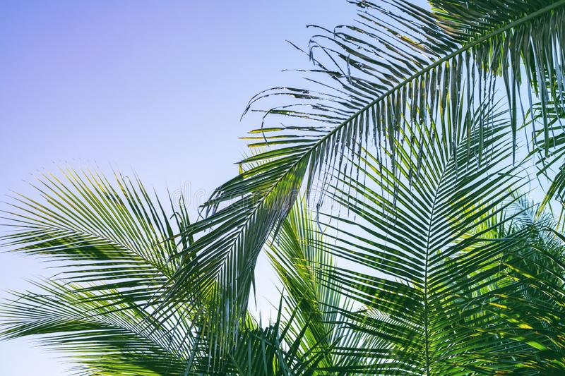 Fluffy palm leaf on sky background. Blue green tropical nature photo. Tropic paradise banner template with text place. Green palm leaf summer photo. Exotic royalty free stock images