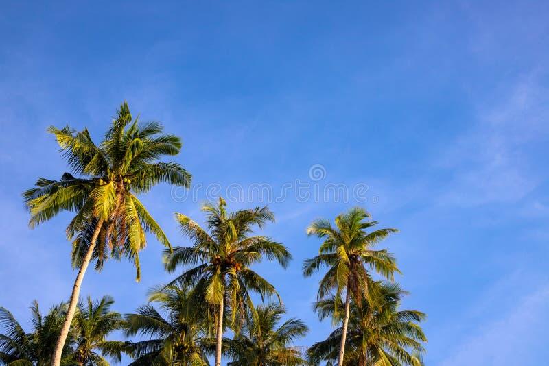 Fluffy palm tree on blue sky background. Idyllic tropical nature photo. Green palm leaf on wind. Idyllic tropical island royalty free stock images