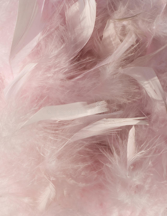 Fluffy Pink Feather Background With Corner Stock Images