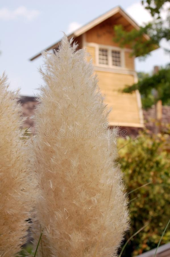 Fluffy plant royalty free stock image