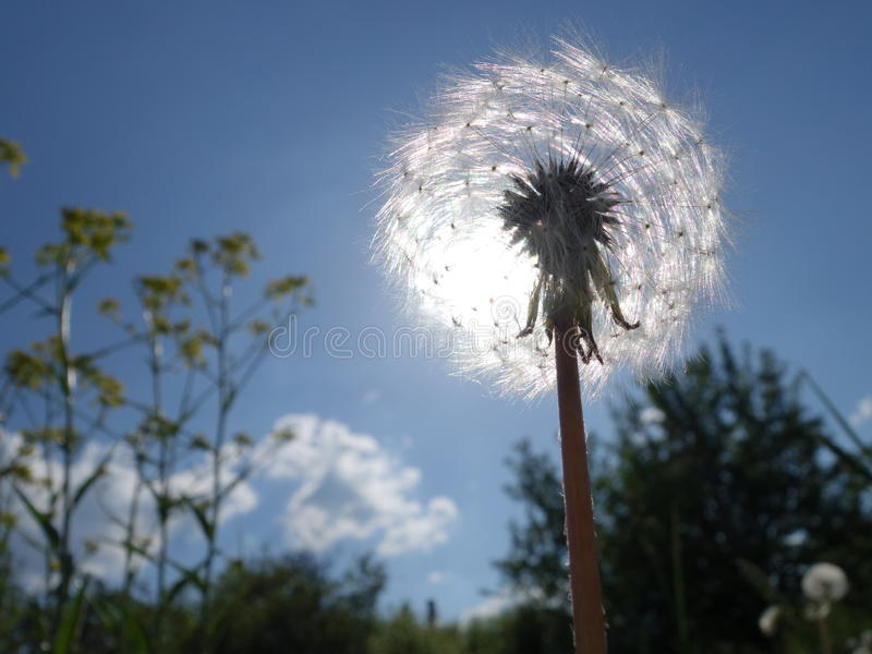 fluffy sun stock photos