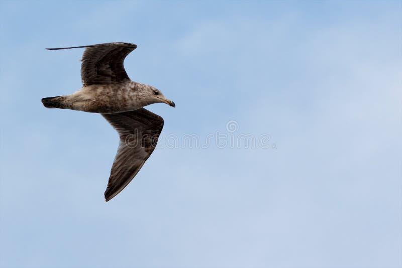 Flug der Freiheit lizenzfreies stockbild
