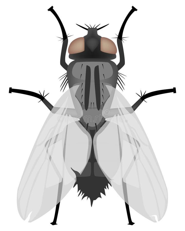 Fluga vektor illustrationer