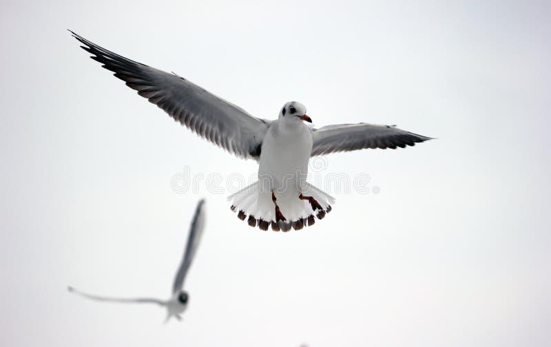 Fluga bort 2 fotografering för bildbyråer