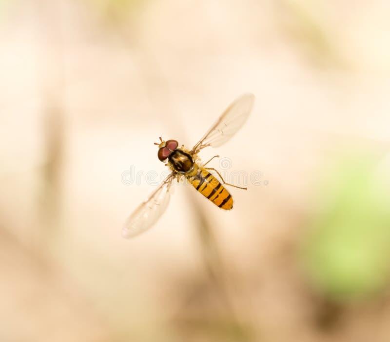 Fluga i flykten i natur Makro royaltyfri foto