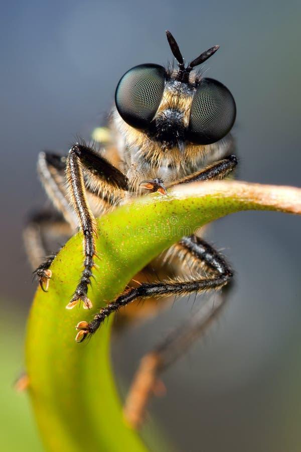 Fluga med beutifullögon royaltyfri fotografi