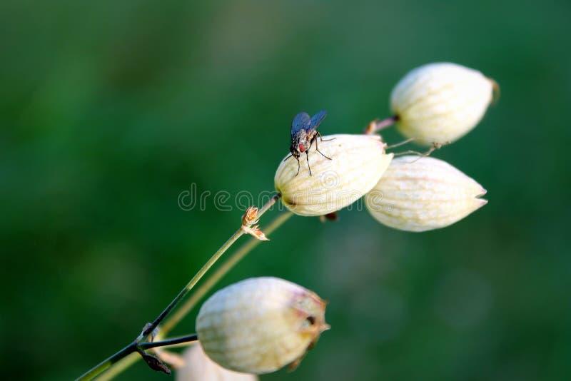 Fluga på en blomma fotografering för bildbyråer