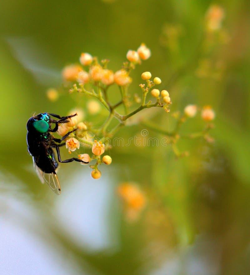 Fluga på en blomma arkivbild
