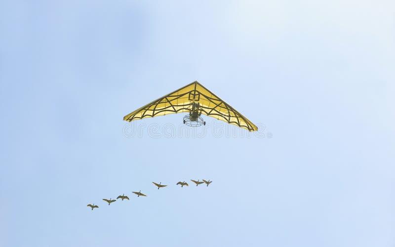 Flugan frigör med fåglarna arkivbild