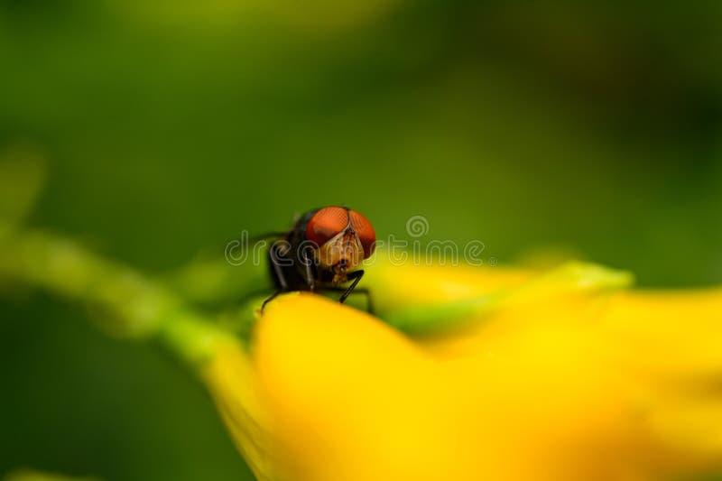 Download Flugan i trädgård parkerar fotografering för bildbyråer. Bild av finna - 78730881