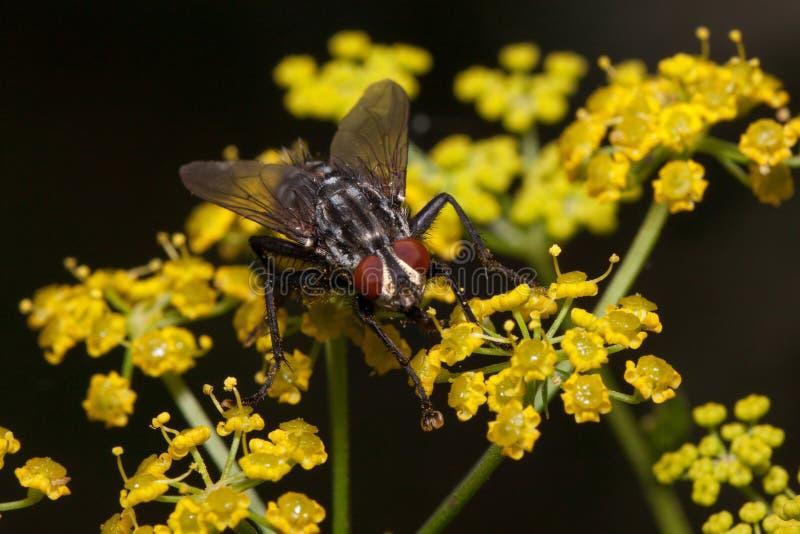 Flugan sitter på små gula blommor Djur i djurliv arkivbilder