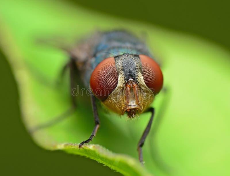 flugor arkivbild
