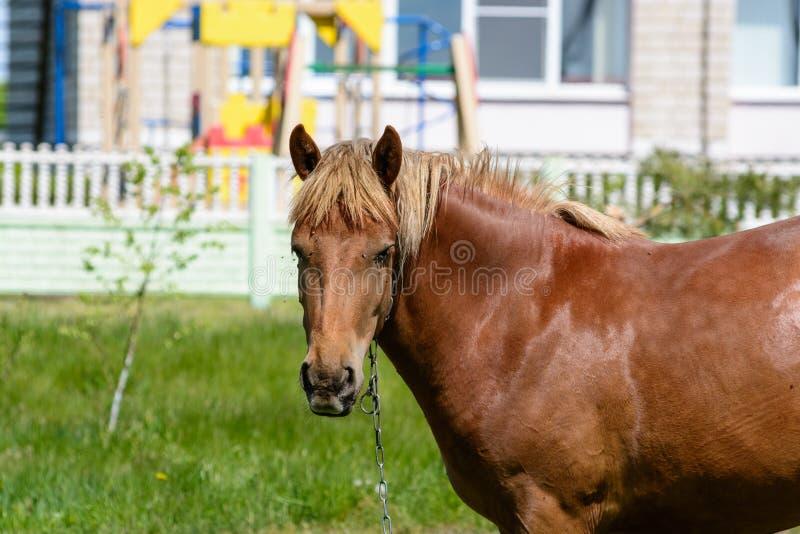 Flugor biter hästen royaltyfri foto