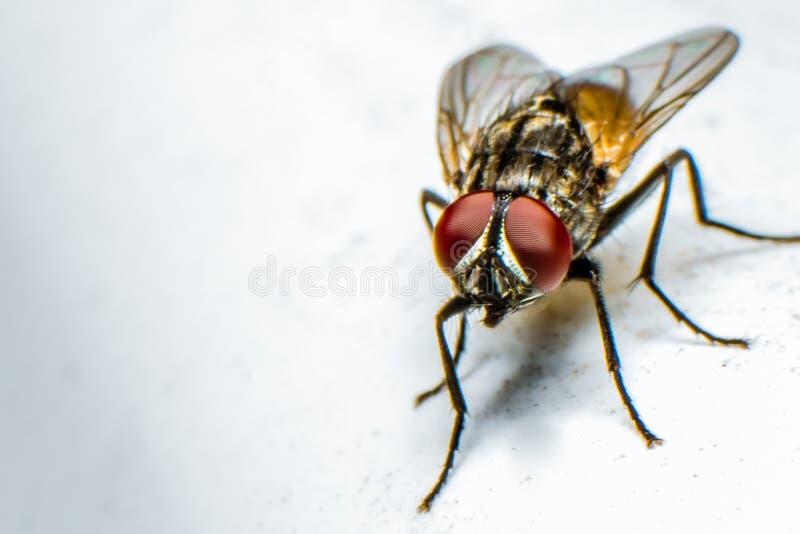 Flugor i detalj arkivfoton