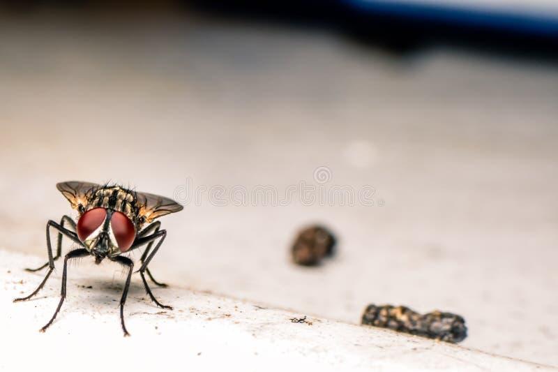 Flugor och skräp royaltyfri bild