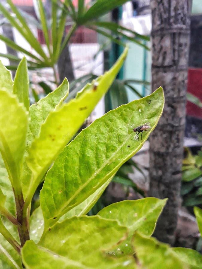 Flugor på gröna sidor royaltyfria bilder
