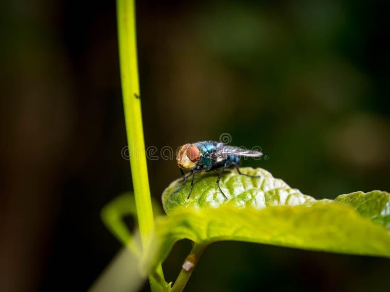 Flugorna på de gröna sidorna med suddighetsbakgrund royaltyfri bild
