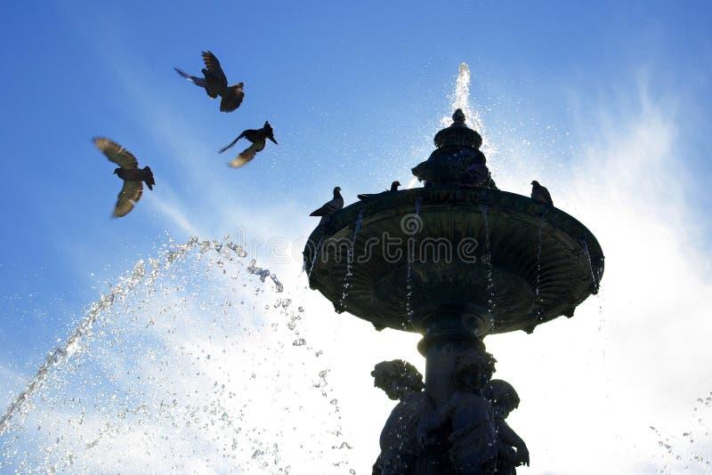 Flugwesen-Tauben stockfotos