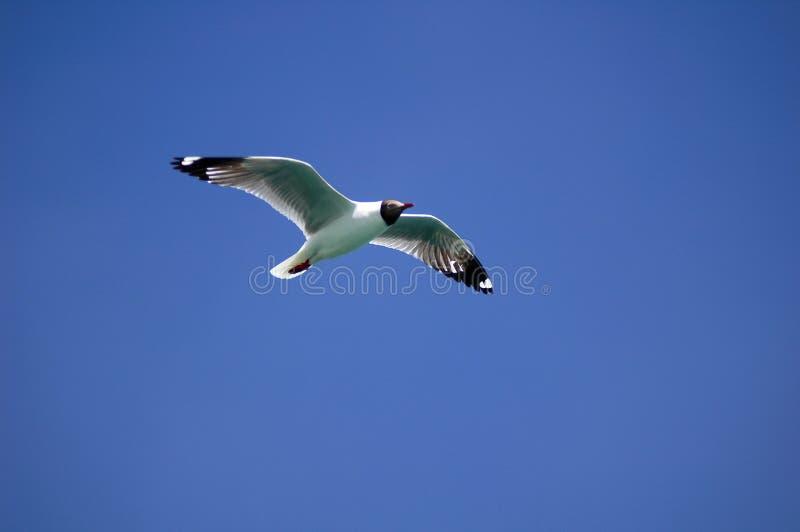 Flugwesen-Vogel stockbilder