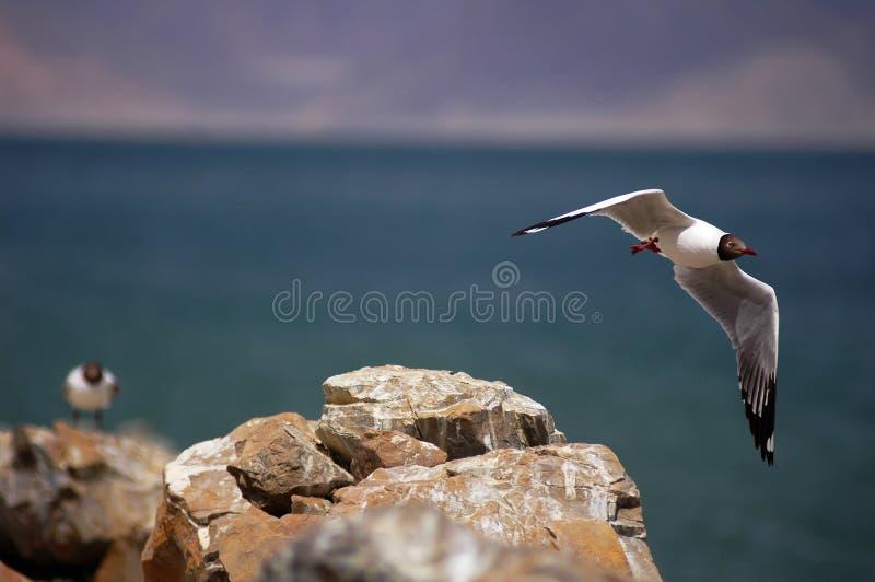Flugwesen-Vogel stockfotografie