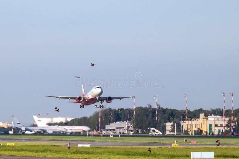 Flugzeug auf Start und Vögeln lizenzfreie stockfotografie
