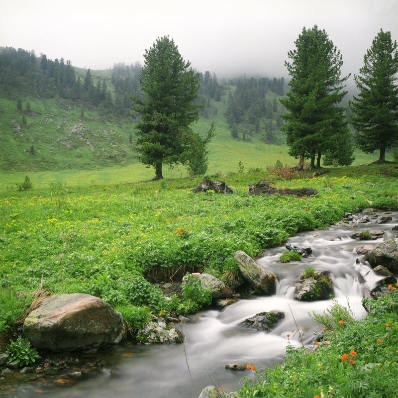 Flujo del río en altas montañas imagen de archivo libre de regalías