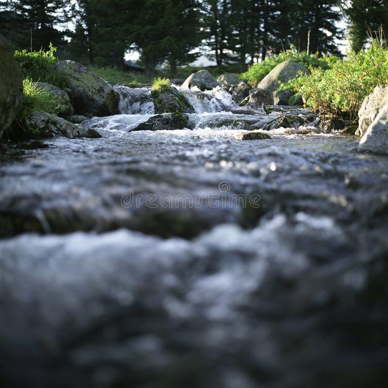 Flujo del río en altas montañas fotografía de archivo