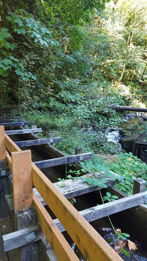 Flume på Cedar Creek Grist Mill royaltyfri foto