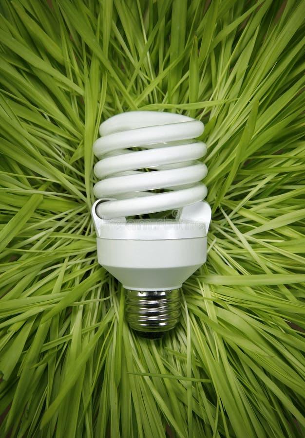 Fluorescente Lamp in een Bed van Gras stock afbeeldingen