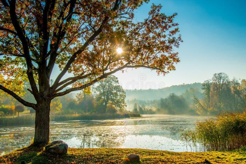 Fluss bei Sonnenaufgang, nebelhafter Fallmorgen stockfoto