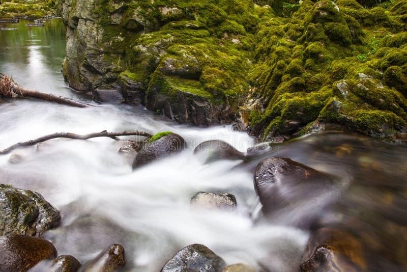 Fluss bei Tollymore Forest Park lizenzfreies stockbild