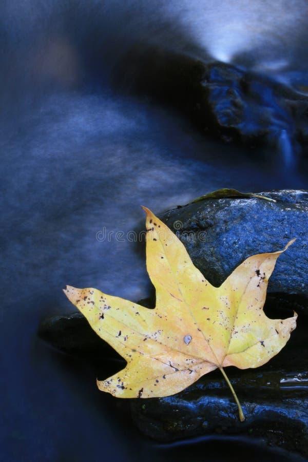 Fluss-Blatt stockfoto