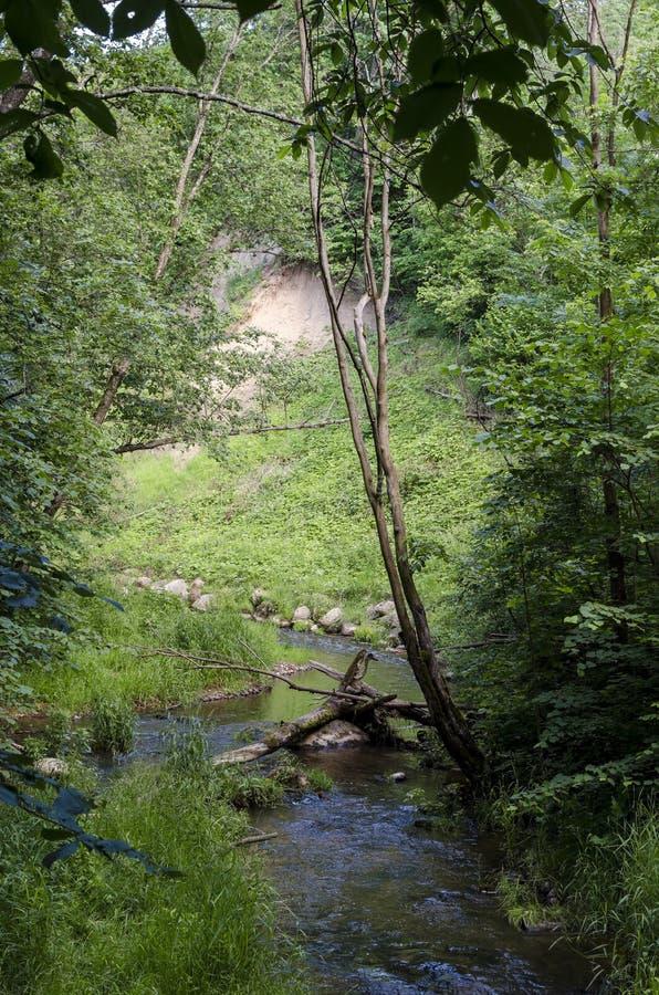 "Fluss DÅ ""kÅ ¡ ta fließt in Neris Regional Park in Litauen stockbild"