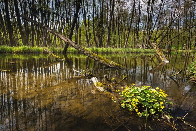 Fluss Dajna nahe Mragowo, Polen lizenzfreie stockfotografie
