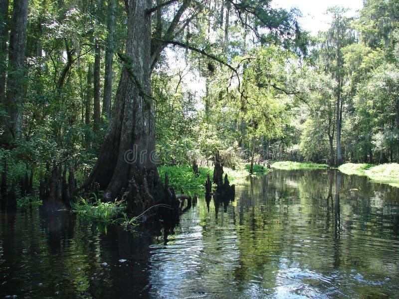 Fluss in den Dschungeln stockbild