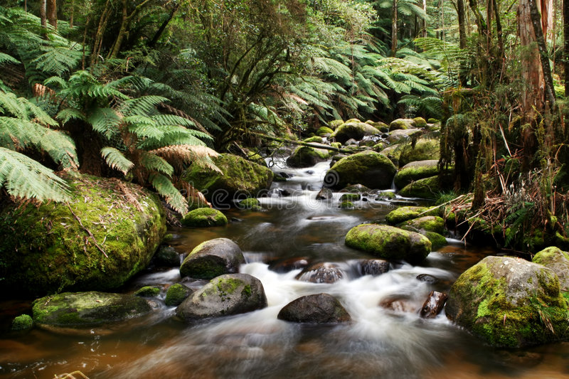 Fluss, der über moosige Felsen läuft stockfoto