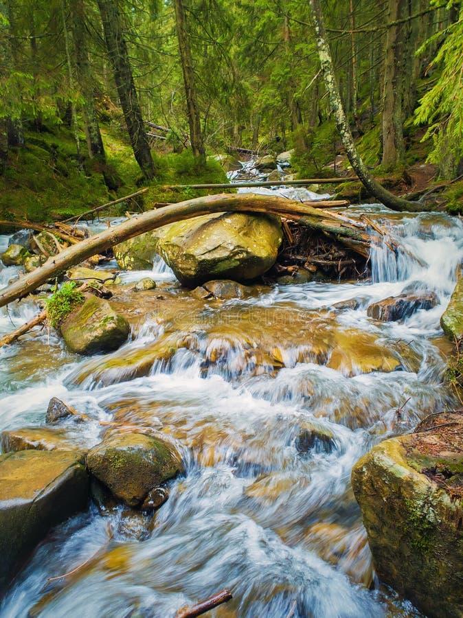 Fluss, der die wilde Natur der Gebirgshügel durchfließt Prut-Fluss in den Karpatenbergen, Hoverla-Spitze Schnelles Flusswasser mi stockfoto