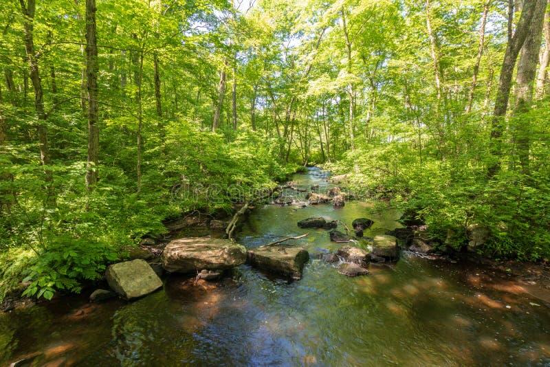 Fluss, der einen Wald durchflie?t lizenzfreies stockfoto