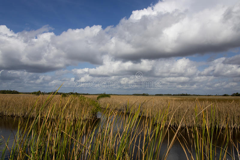 Fluss des Grases in Florida lizenzfreies stockbild