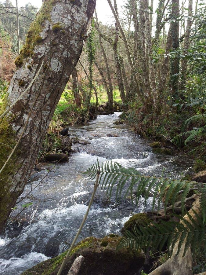 Fluss des Waldes stockbild