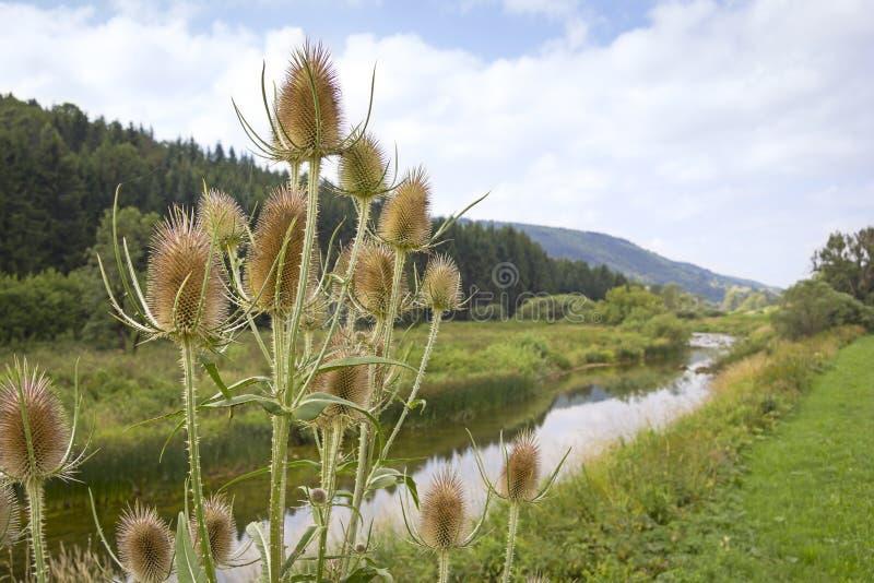 Fluss Doubs stockfoto